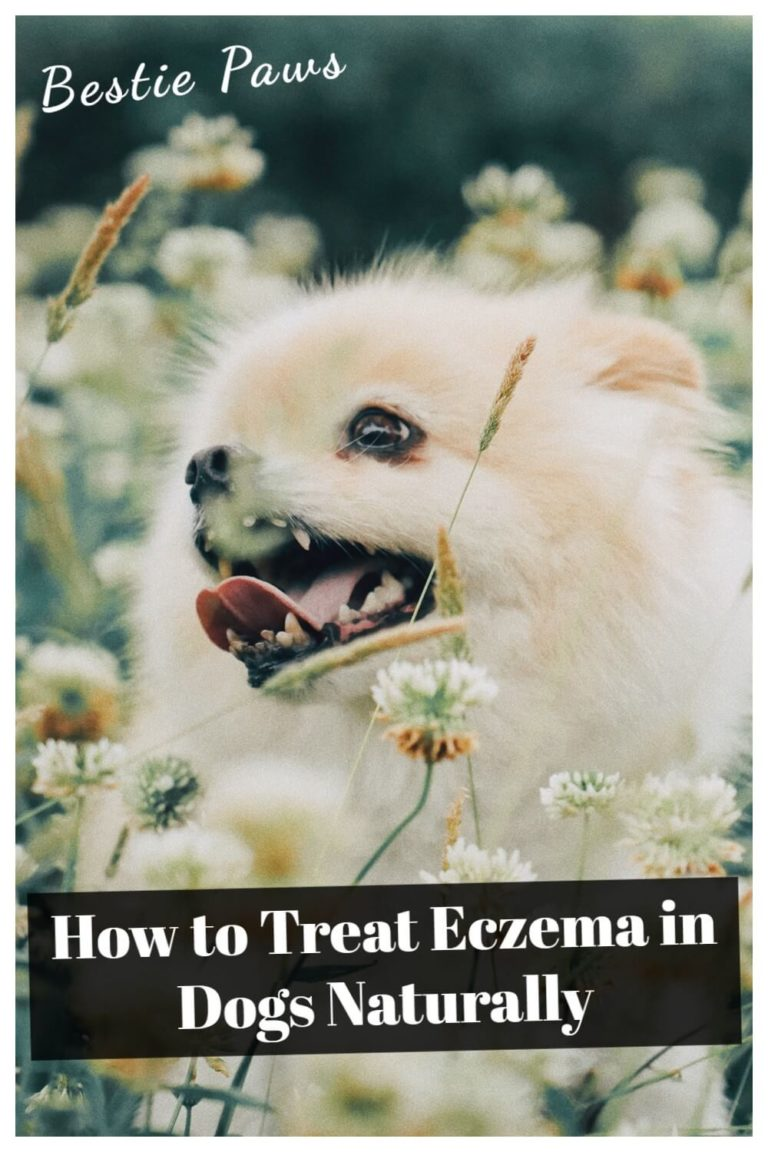 How can I treat my dogs eczema?